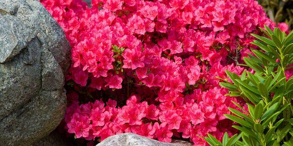 Zen Garden - Bakkevej 27 Vedde 4295 Stenlille