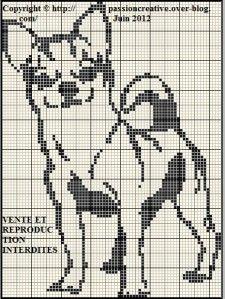Chien---Chihuahua-monochrome.jpg