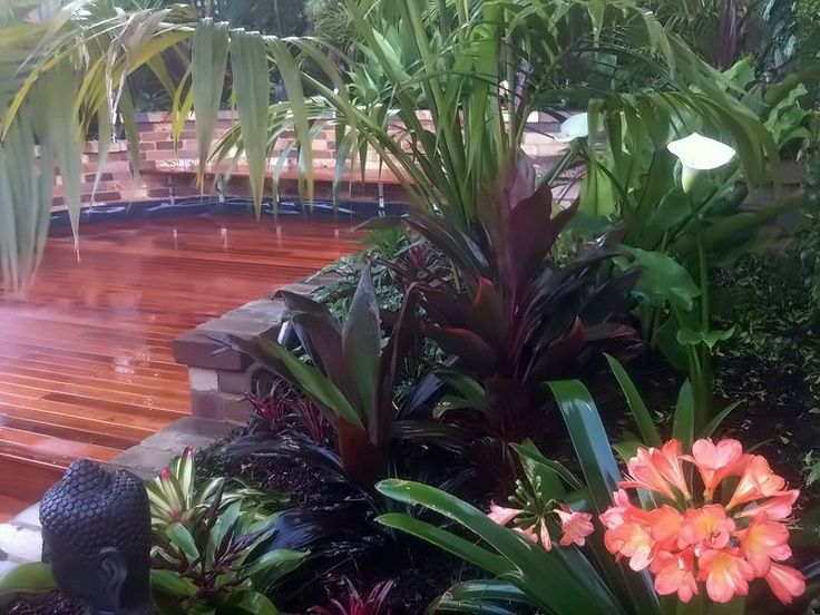 tropical garden courtyard inner west sydney kentia palms cordylines bromeliads ajuga