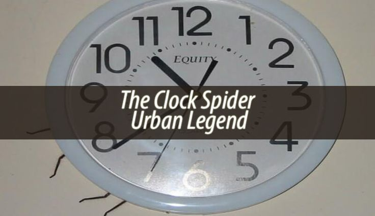 The Clock Spider urban legend is quite well-known. Mostly because it's not really a legend as much as it is real. Someone actually saw this spider!