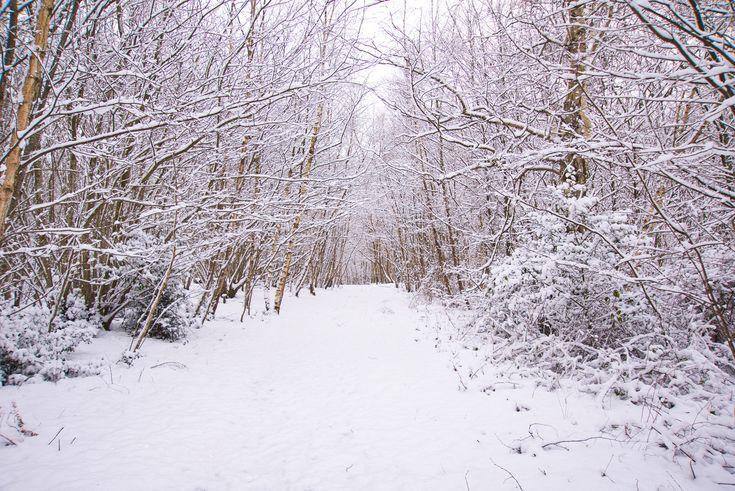 #MySundayPhoto - Snow