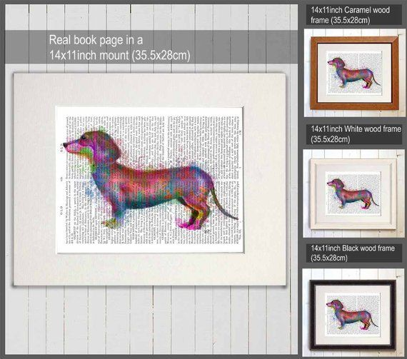 Dachshund Artwork Dachshund Rainbow Splash Print Doxie Dog