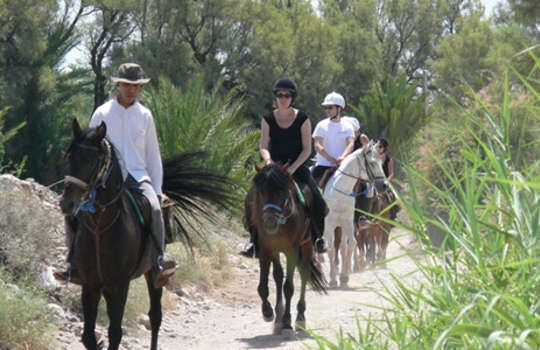 Blazing Saddles - Horse Riding & Quad Tours from $95 Call Us 1300 731 620 or visit http://www.fnqapartments.com/tour-blazing-saddles-horse-riding-quad-tours/area-cairns/