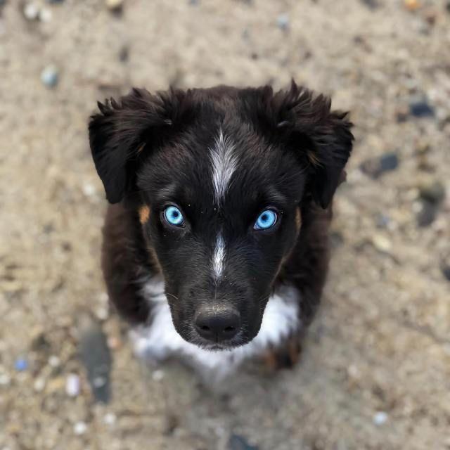 Der süßeste Welpe des Tages – 17 Bilder – Viralovers.com #petdogpicturespuppy