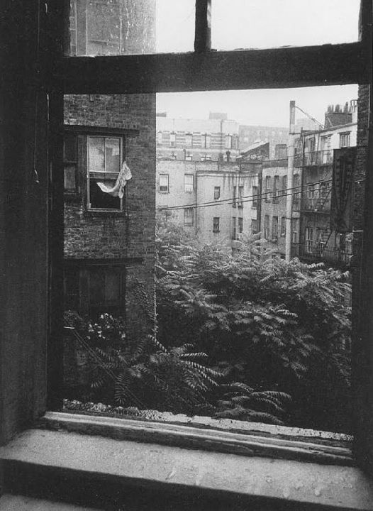 a view of the east village from the back of allen ginsberg's apartment.