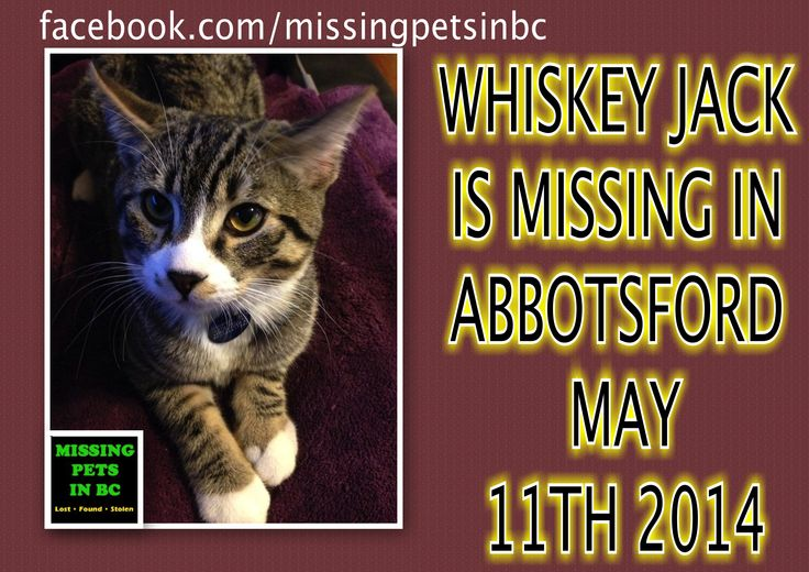 WHISKEY JACK IS MISSING IN ABBOTSFORD