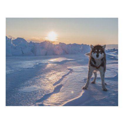Sled Dog on the Sea Ice | Qaanaaq Greenland Panel Wall Art -nature diy customize sprecial design