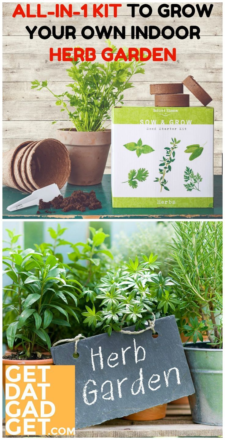 Nature S Blossom Herb Garden Seed Starter Kit In 2020 With Images