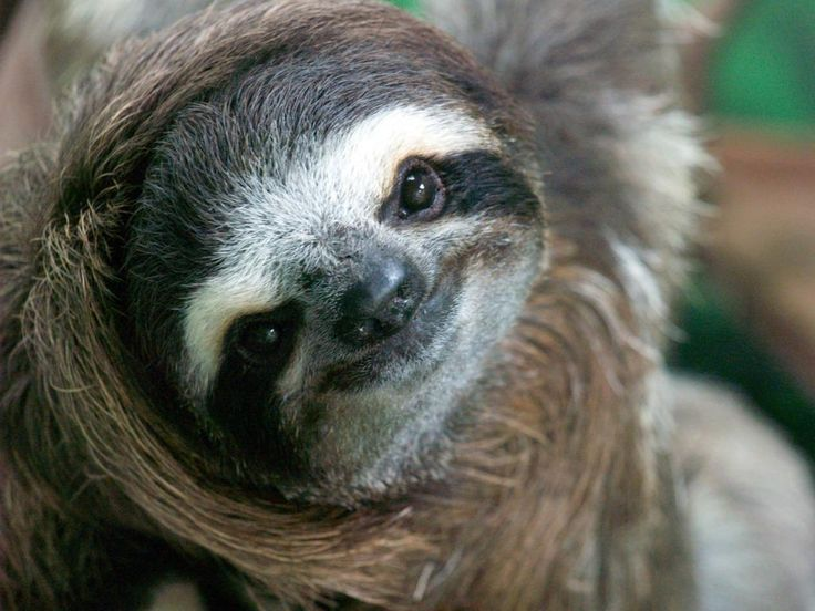 Costa Rica Wildlife Sanctuary (Puerto Limon): Top Tips Before You Go - TripAdvisor