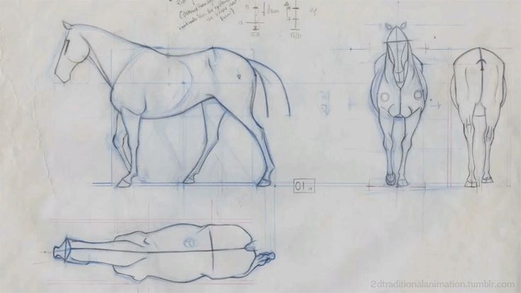 For those in animation, I present to you a horse. - Imgur