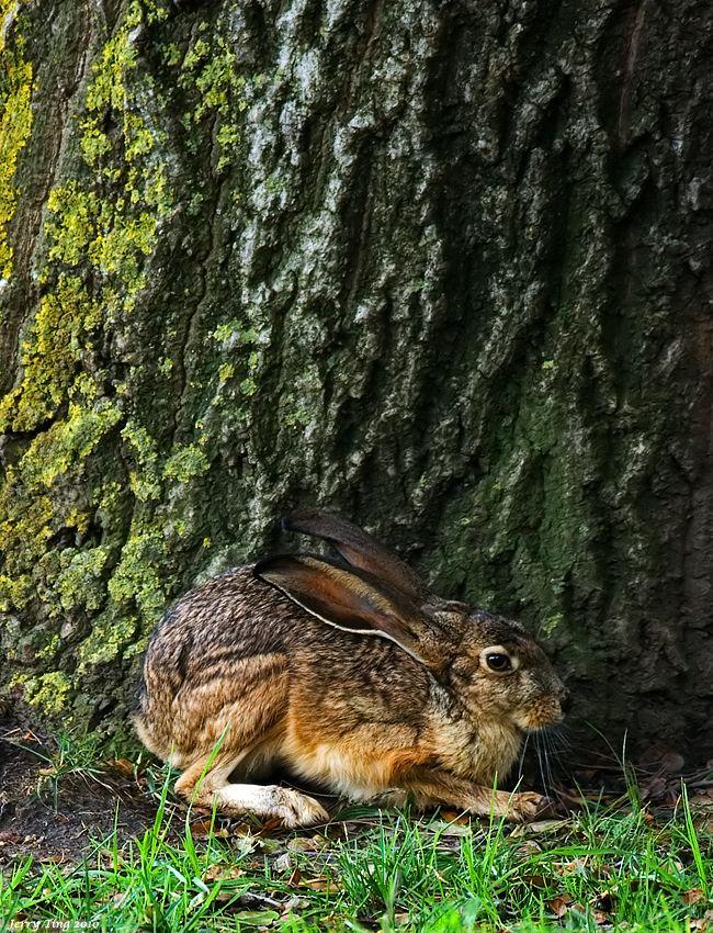 "Hare ~ Miks' Pics ""Animals ll"" board @ http://www.pinterest.com/msmgish/animals-ll/"