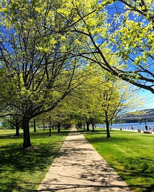 """""""Spring in the Berra."""" Instagrammer @joshuataylorcyclist snapped this colourful Canberra photo by Lake Burley Griffin. Why not take advantage of the capital's fabulous spring weather by hiring a bike or segway and riding around the central lake?  #visitcanberra #onegoodthingafteranother"""