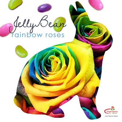 45 best images about disco event on pinterest for How much are rainbow roses