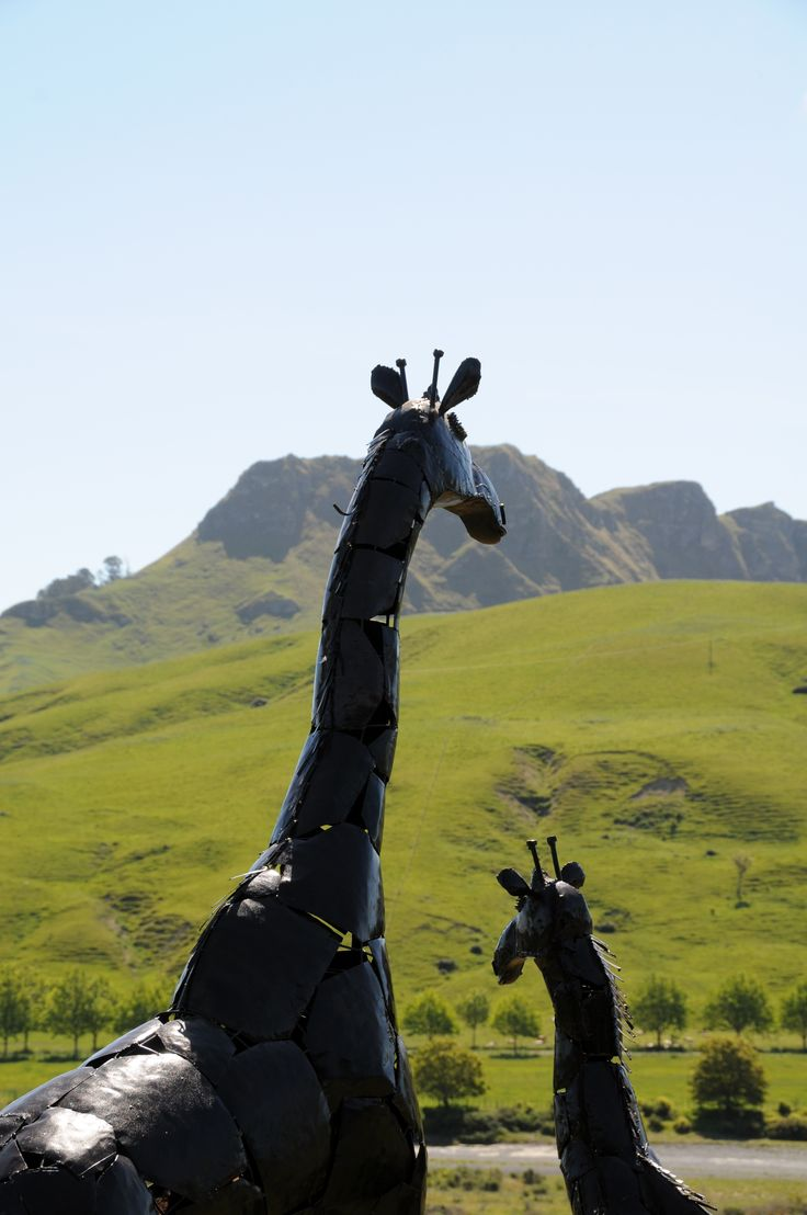 Birdwoods mother and child giraffes looking out to Te Mata Peak in Hawke's Bay, New Zealand