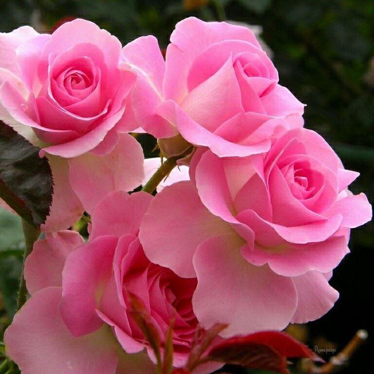 Pink Flowers Wallpaper: 17 Best Ideas About Pink Flower Wallpaper On Pinterest