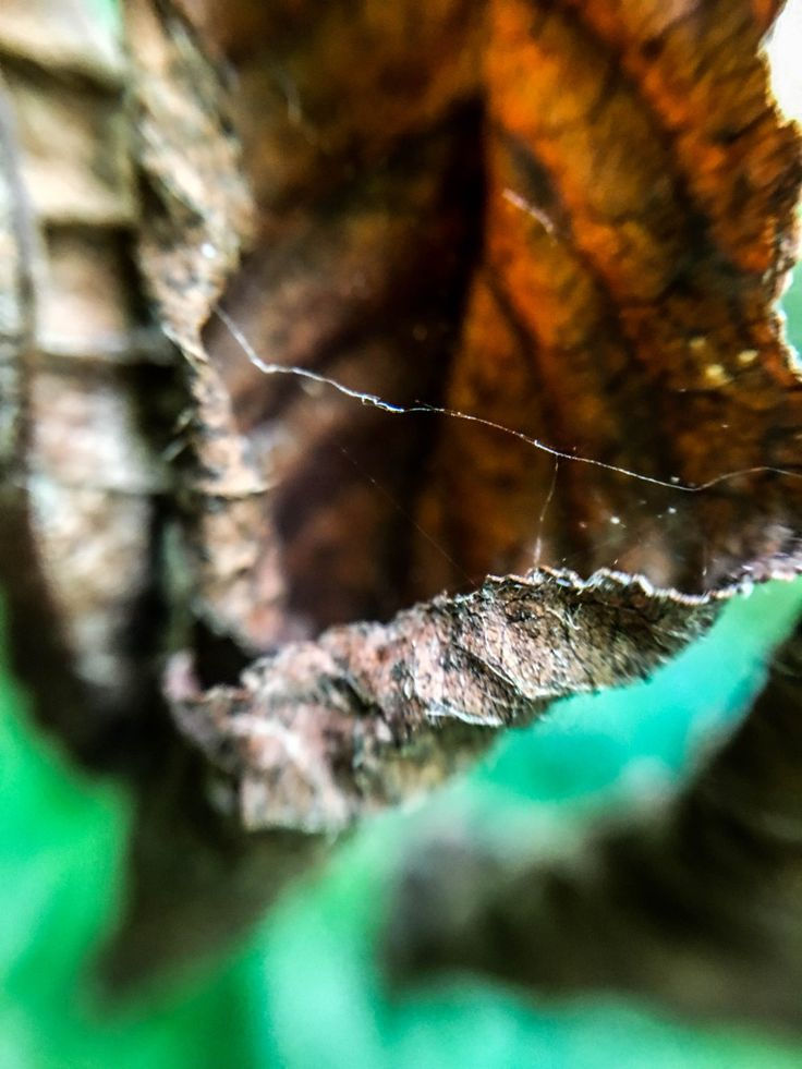 Spiderweb on a leaf