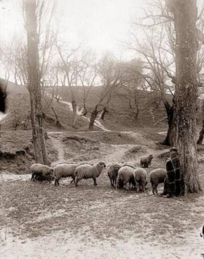 Un pastor en la Casa de Campo
