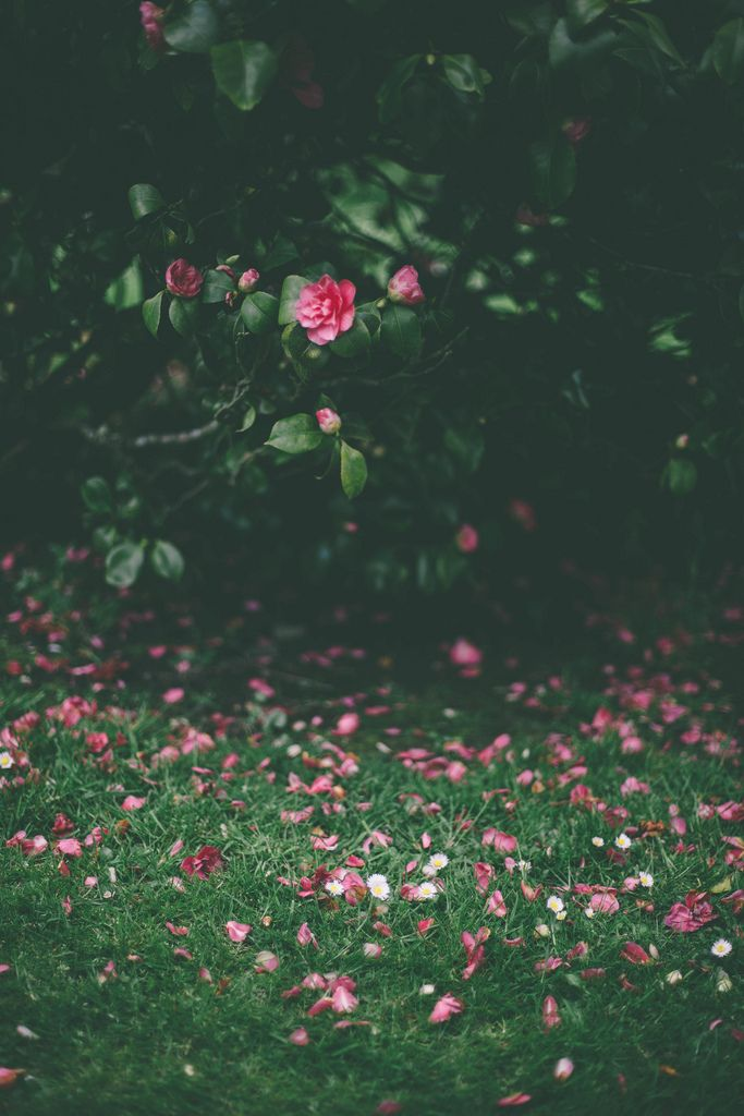 You gotta have a camellia in your southern garden...  Floral by Beth Kirby | {local milk}