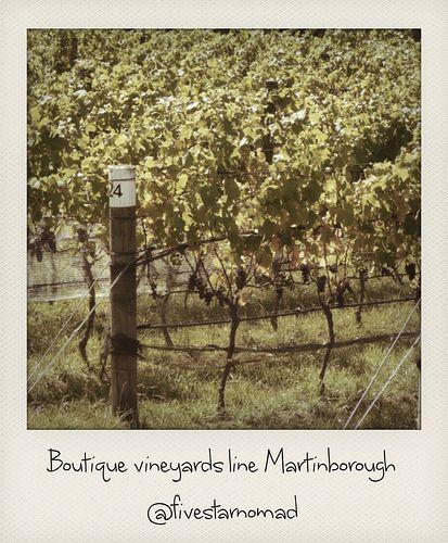 Boutique vineyards line Martinborough
