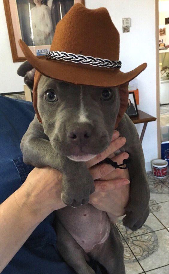 75 Cowboy Dog Names Funny Dog Names Funny Animals