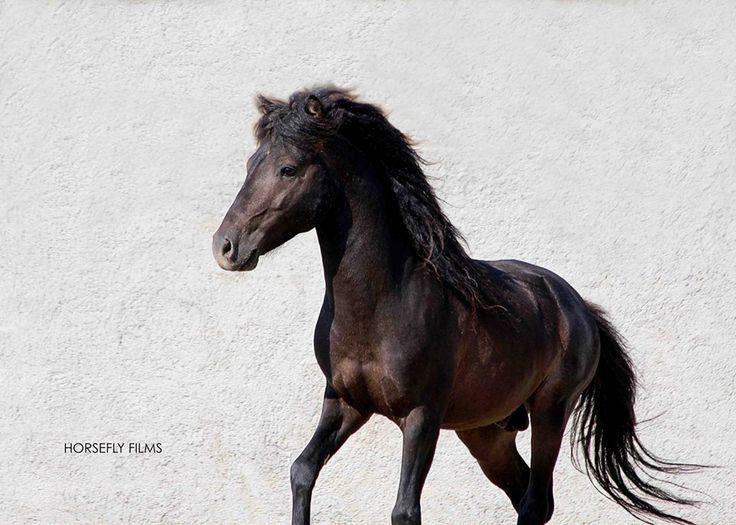 Skyros Island Horse Trust - Horsefly Films