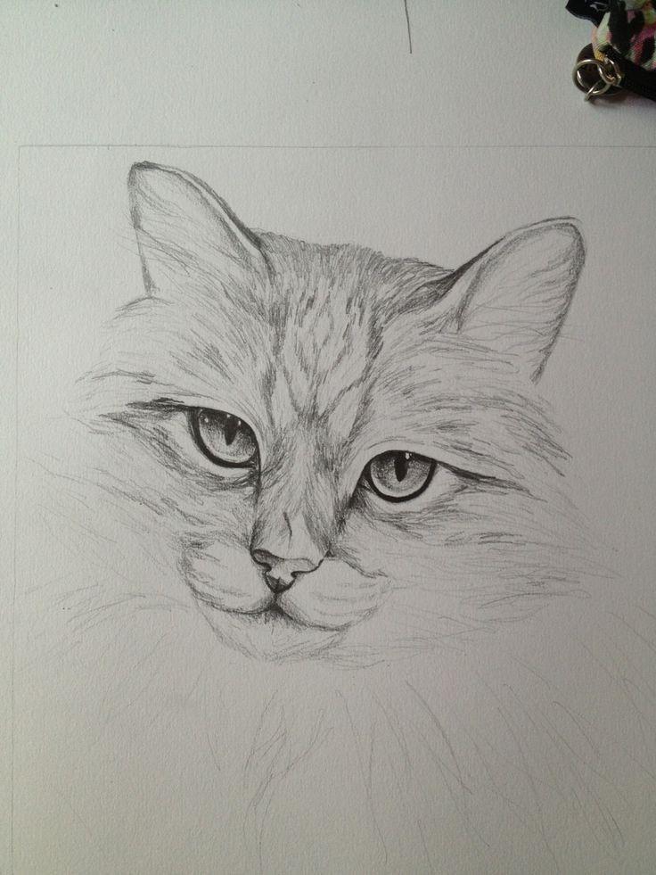 X Pinterest Why6947 Bleistiftzeichnung Mit Bildern Katze