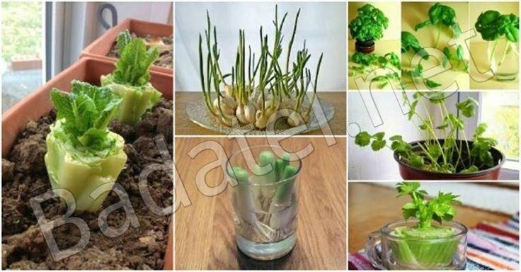Domáca zelenina má hneď niekoľko výhod – je lacnejšia, chutnejšia a výživnejšia. Pozrite sa, ako si sami dopestujete až 10 druhov zeleniny.