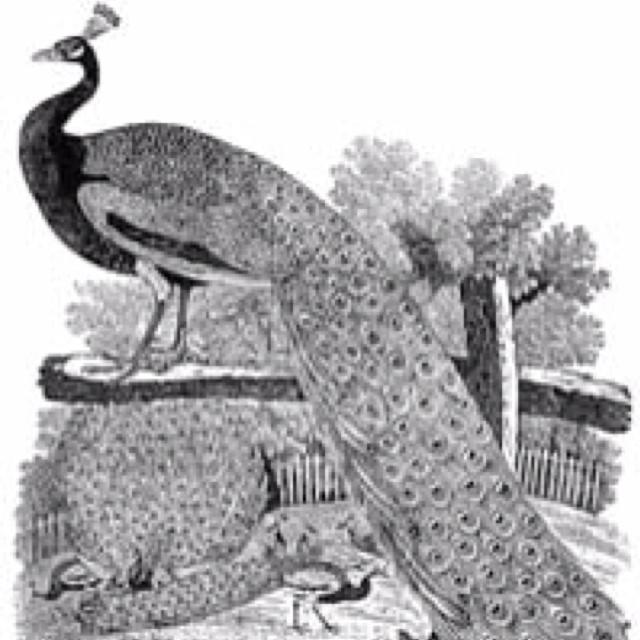 Thomas Bewick Engraving Bird artists, Art, Illustration