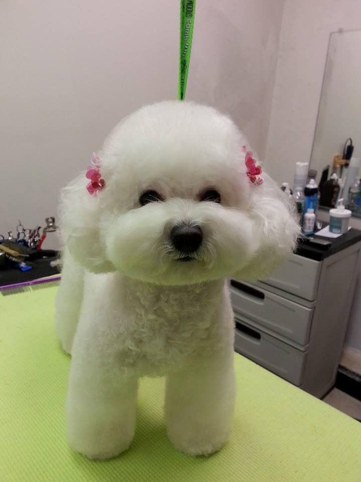 Japanese style of grooming                                                                                                                                                                                 Más