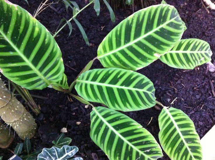 wonderful leaf patterns