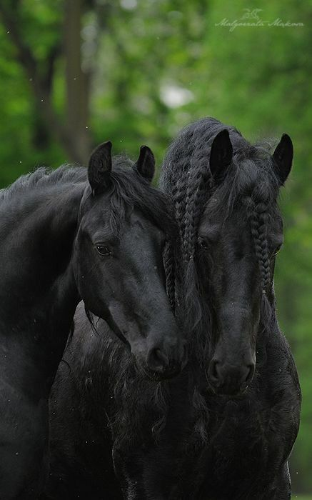 75 best starstable images on Pinterest | Horse games, Star ...