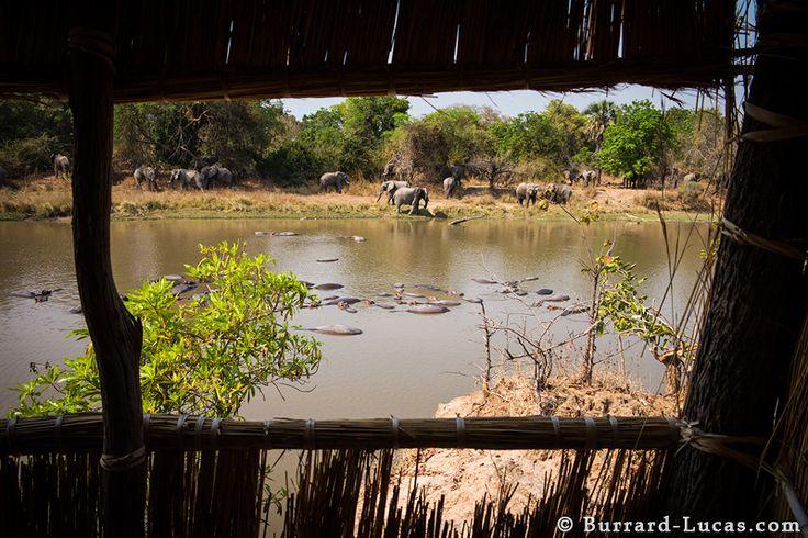 Luwi Bush Camp | Better Late Luxury