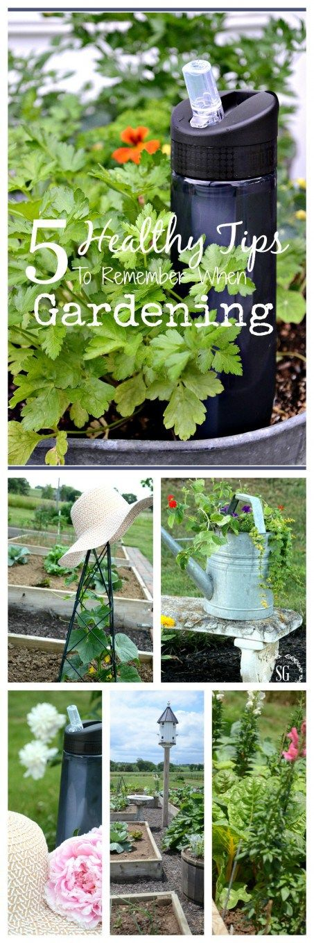 5 IMPORTANT THINGS TO KNOW WHEN GARDENING-Great tips for staying heathy and safe when gardening in the summer!