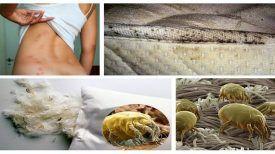 Détruisez les 1.5 millions d'acariens qui vivent dans votre lit avec un seul geste seulement