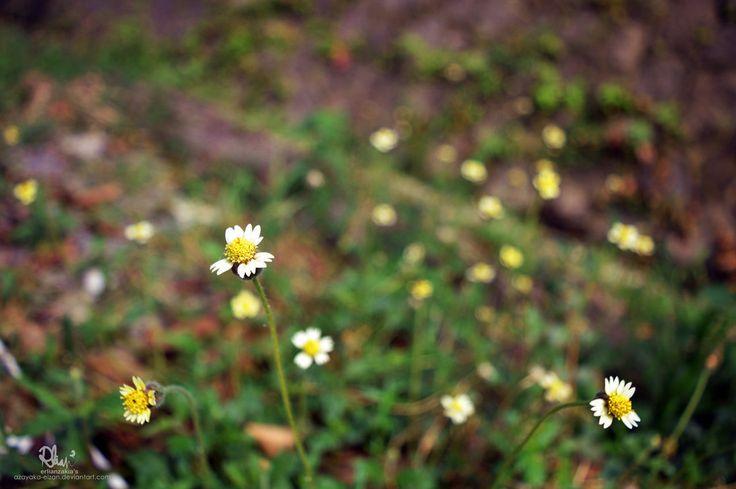 Depth of Field by azayaka-eizan.deviantart.com on @DeviantArt