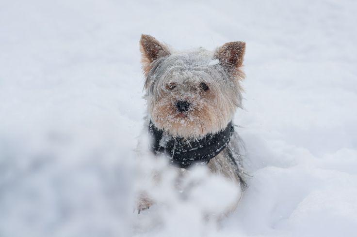 Winter Dog - Winter Dog