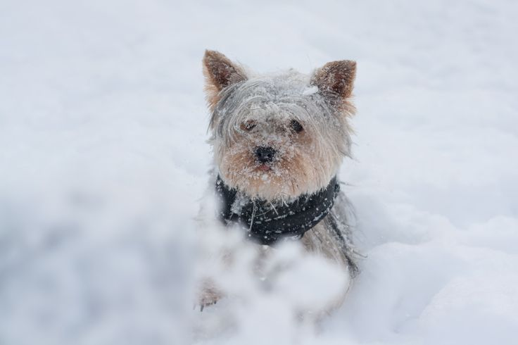 Winter Dog - Winter Dog