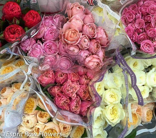 41 best raw garden roses images on pinterest garden roses david austin roses and hot pink - Rose cultivars garden ...