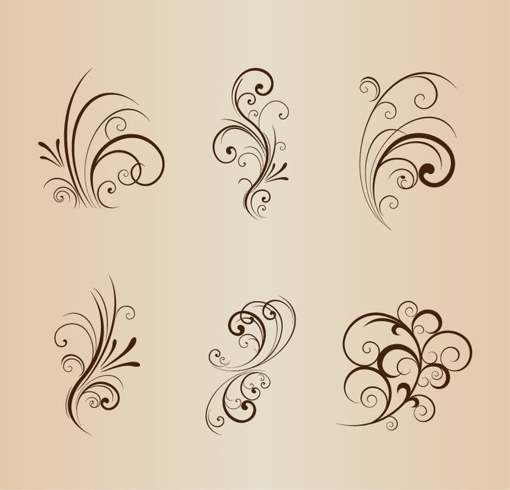 Collection of Floral Design Elements Vector Illustration