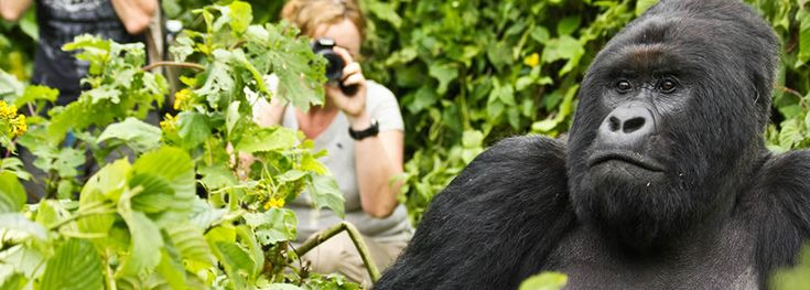 Come and take a #TourinRwanda and get the unlimited fun. Check out more @ https://africagorillasafaris.net/rwanda-tours/