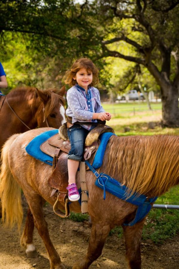 138 Best Images About Horse Theme Birthday Party On Pinterest
