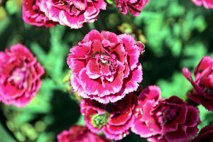 """Colección """"El jardín de los colores"""" Aquí, en tan bello jardín me encuentro. Contemplo la vida pasar, cómo la vida se desenvuelve y vuelve a ser. Admiro al Sol y espero por el agua para crecer. (#DixieBerliot)"""
