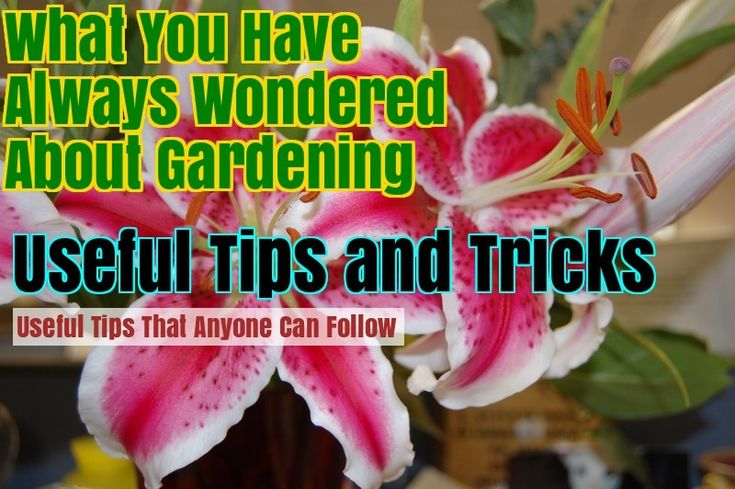 Grow A Lovely Organic Garden With These Tips – Gardening Ideas