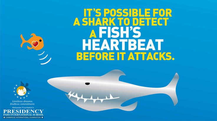 """Fact about #SHARK """"It's Possible for Shark to Detect a Fish's Heartbeat Before it Attacks."""" #presidencyindo #primary #preprimary #Nursery #Kids"""