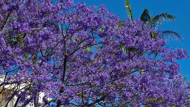 Our World in Color: Purple (PHOTOS) - weather.com