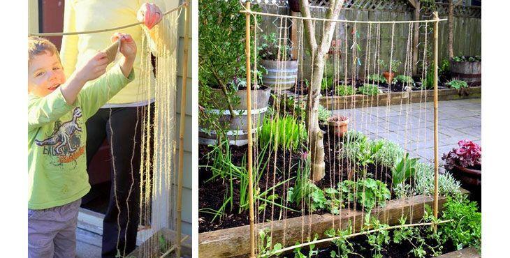 Let plante espalier som børn kan lave (Easy Garden Trellis to Teach Gardening to Kids)