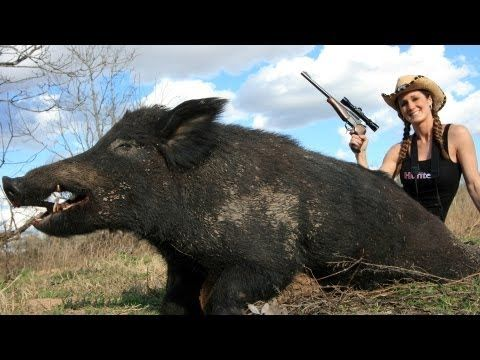 Winchester's Deadly Passion: Texas Hogs