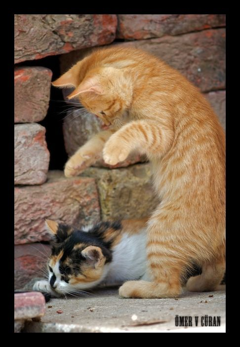 Immediately I have you / Gleich hab ich dich ;-)))   #photo by jevigar on DeviantArt #funny kitty kitten playing cat cats animal pet fur fluffy cute nature