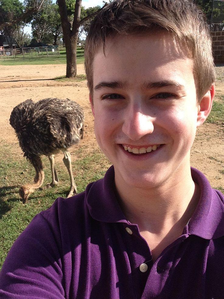Ostrich just running around at the lion park! Ostrich selfie!