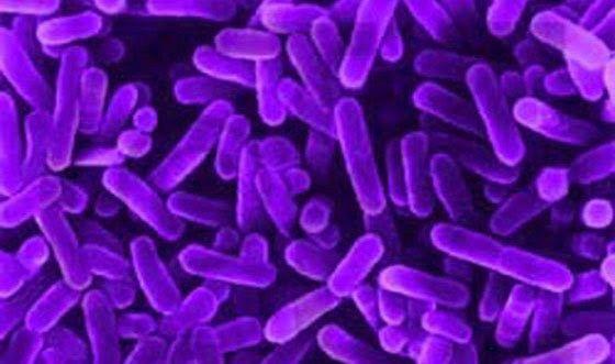 βακτηρίδια, μικρόβια, περιβάλλον